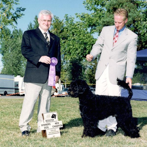 convolo-champion-portuguese-water-dog