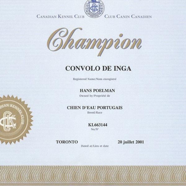 convolo-chien-deau-portugais